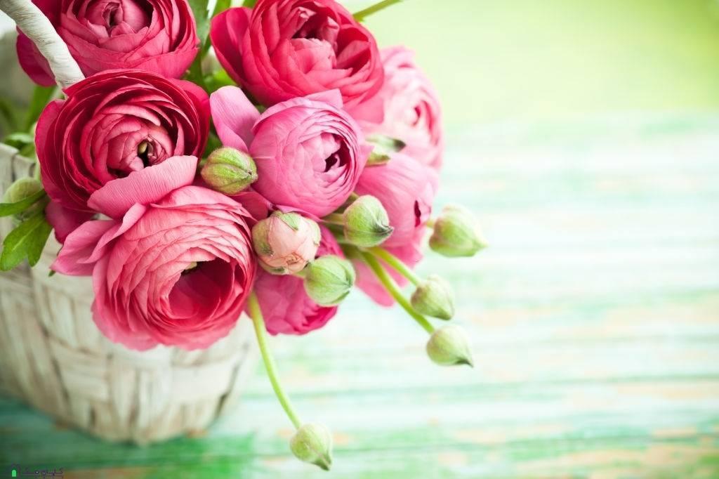 گل شاخه ای آلاله